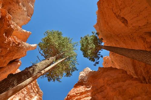 Bryce Canyon National Park - Navajo Loop Trail (Explore)