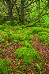 Killarney Forest - HDR