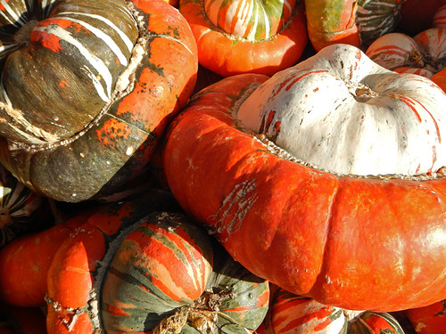 squashes for sale at the local fruit stand