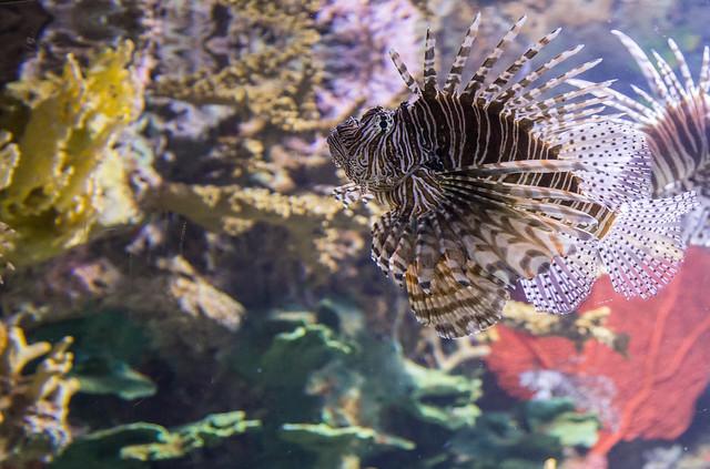 Cool Looking Fish | Flickr - Photo Sharing!