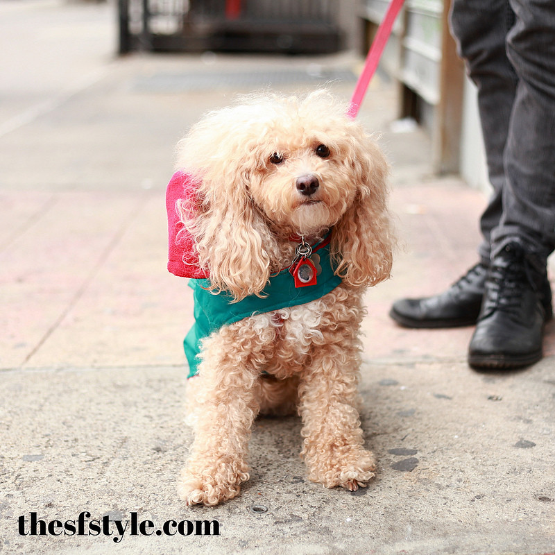 puppy couture, STREETFASHIONSTYLE,