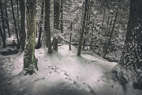 statepark winter sunlight snow water moss woods stream shadows pennsylvania january tracks footprints saturday 18th textures shade rhododendron lichen snowfall wooded 2014 hemlocks carboncounty hickoryrun shadesofdeathtrail