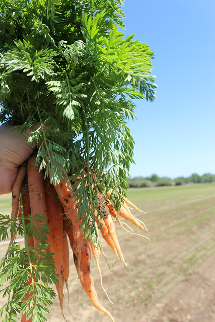 Our Farm Fresh Carrots