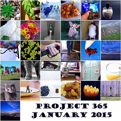 Project 365 - Jan 2015 Mosaic