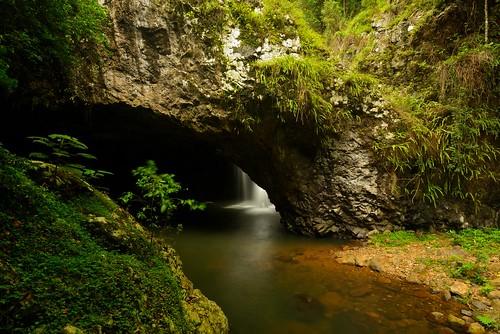 rainforest australia naturalbridge queensland newsouthwales aus springbrooknationalpark limpinwood