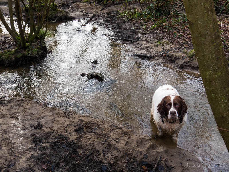 Max in the stream