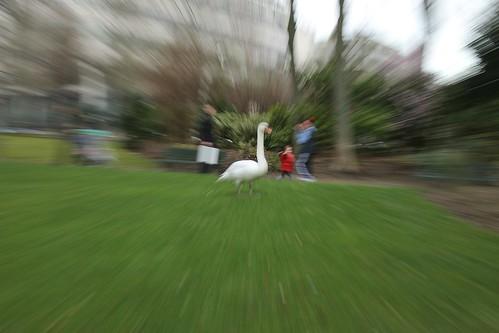 Photo d'animaux prise dans un parc a paris