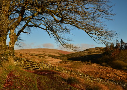 blue england sky cold tree beauty stone wall sunrise landscape gate track rustic dry devon sunlit tones picturesque dartmoor postbridge