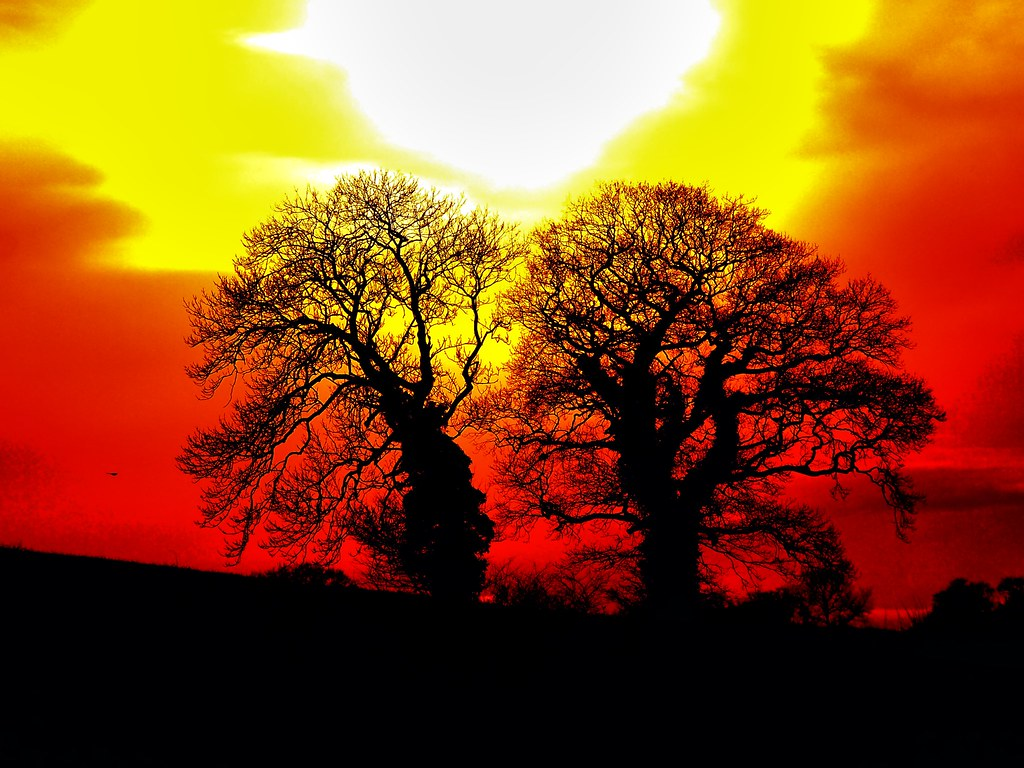 Sun set with trees