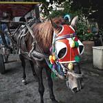 Kuda Delman