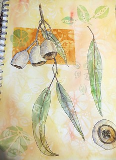 from my sketchbook ~ pods and leaves