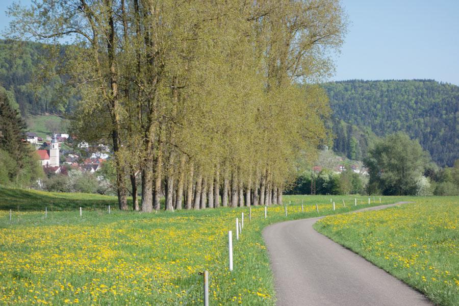 La balade de l'Arbre de mai (bis): Forêt noire et Neckar [2013] •Bƒ  - Page 4 8758330742_6fec11c55f_o