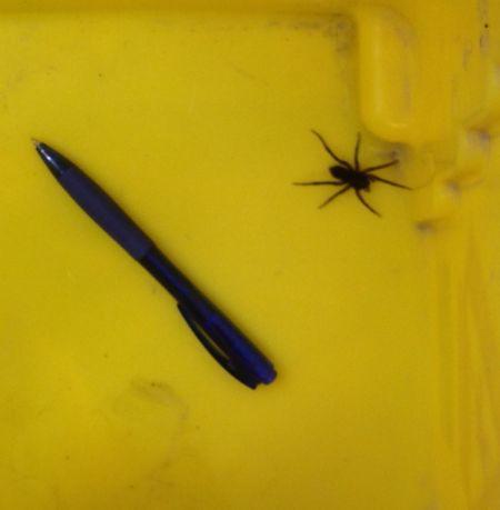 spideratwork'
