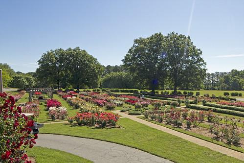 Bicentennial Rose Garden II by bahayla