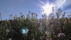 2012 08 20 Morning Beach