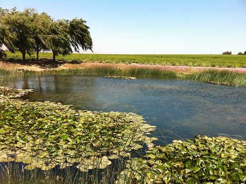 ca trees water landscape pond day salinas winery clear lilypads salinasvalley wrathwinery