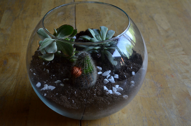 DIY Glass Terrarium 14