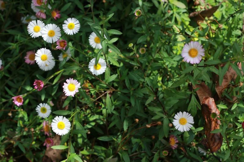 flores-1024x682