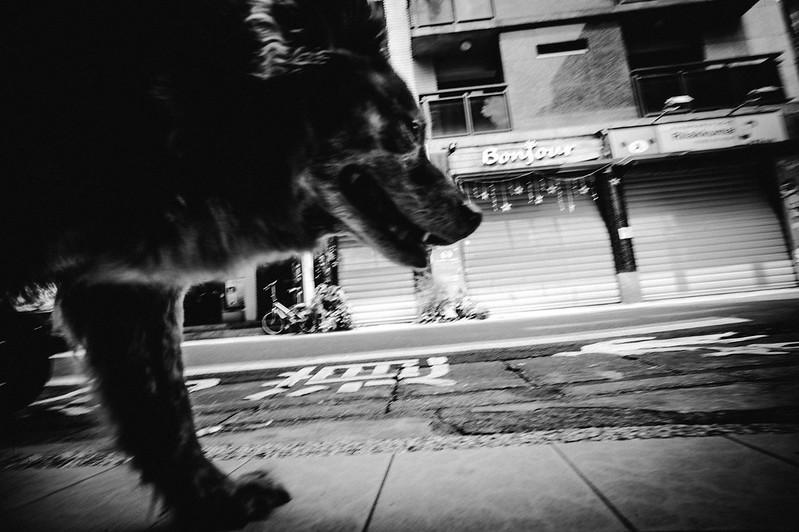 犬の記憶。