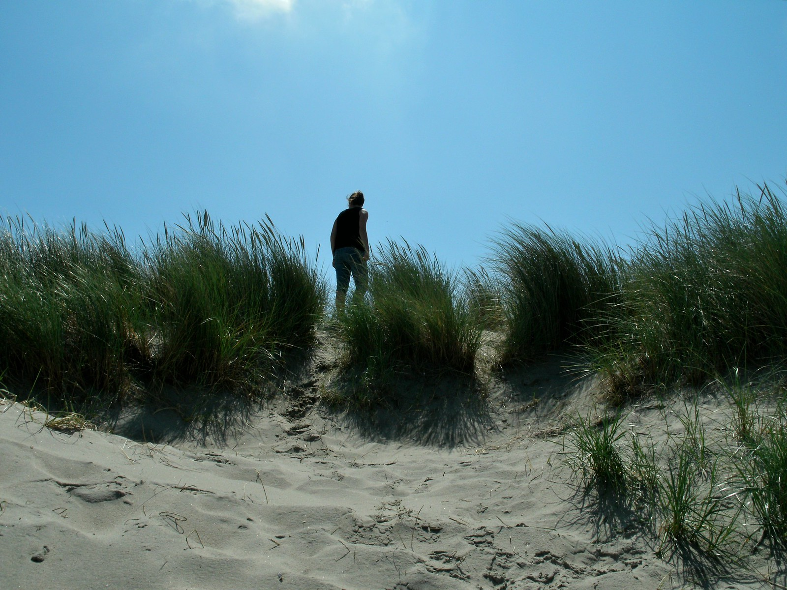 A silhouette of a girl in-between the beach vegetation.