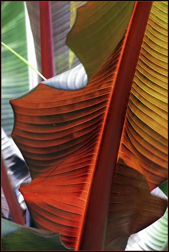 abstract leaves sails fractalblend ilobsterit