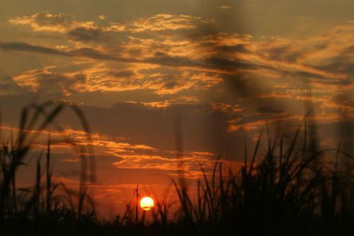 park sunset summer sky sun nature grass silhouette clouds evening meadow thegalaxy