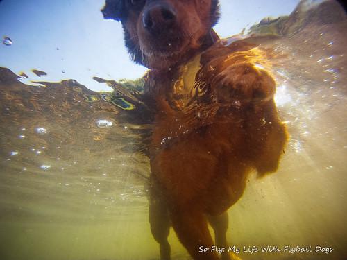 GoPro Under Water-5976