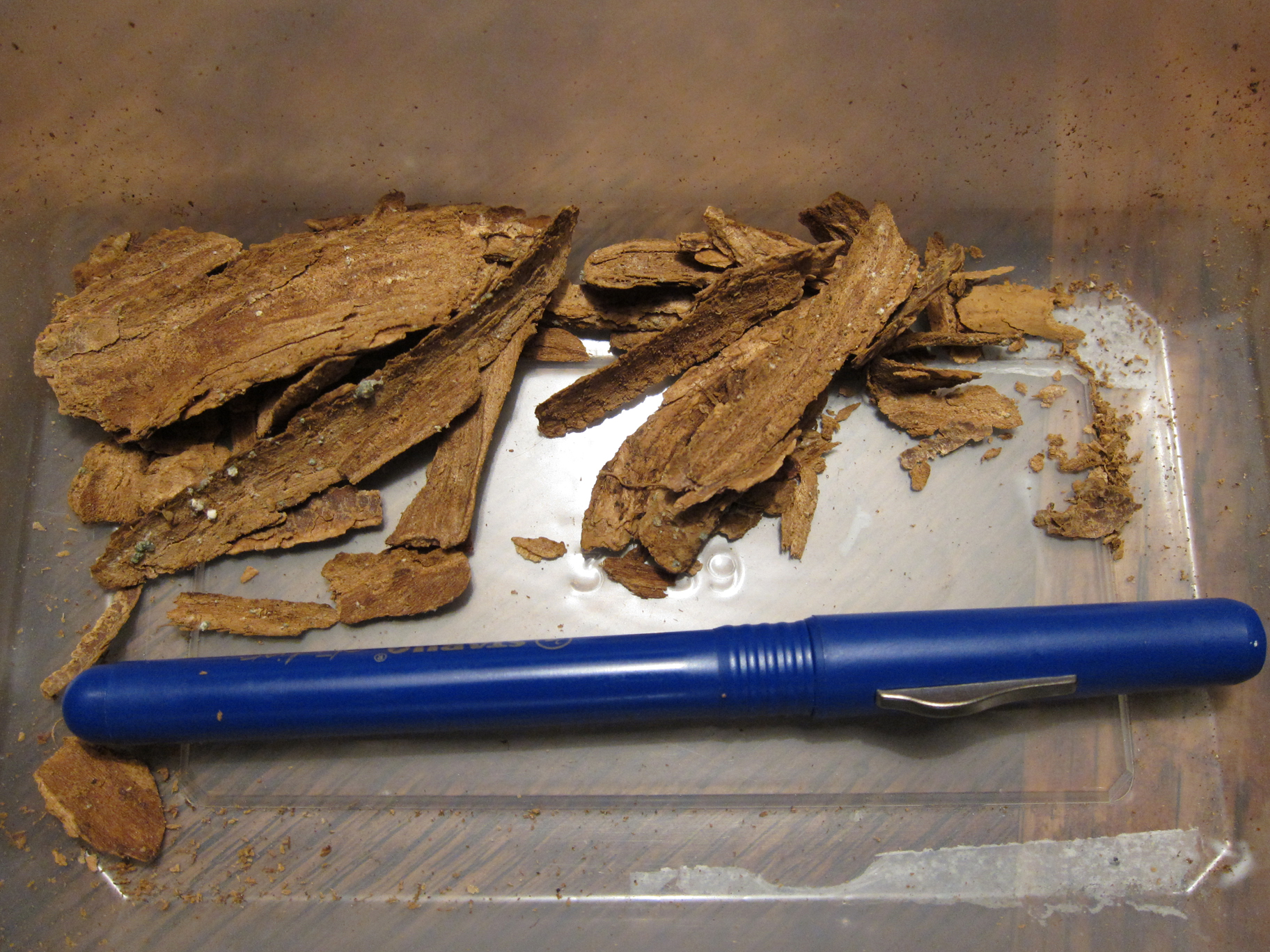 dried tabernanthe iboga root bark