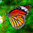 the *the butterfly tree ~ an invitation group ~ P1/A2 group icon