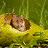 the S Johnson's  Fauna High Quality Images!  (1 per day Award 2) group icon