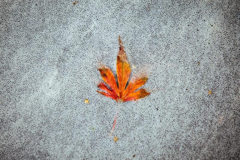 一葉知秋。