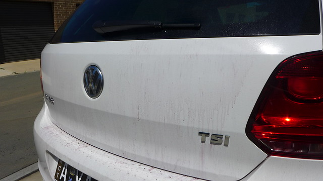 Sophie's White VW Polo