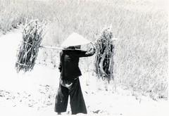 Viet Nam