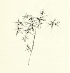 """British Library digitised image from page 251 of """"'S Gravenhage in onzen tijd ... Met 80 illustratiën, etc"""""""