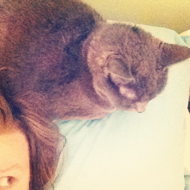 I greet the day with a cat on my head. #catsofinstagram