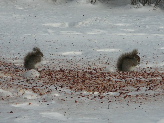 A Frozen Feast