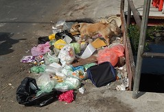 Happy Dog Checking Out the Rubbish