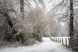 Winter trails