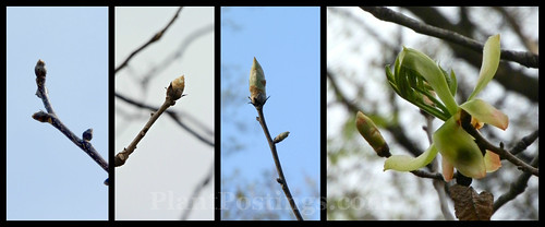buds collage
