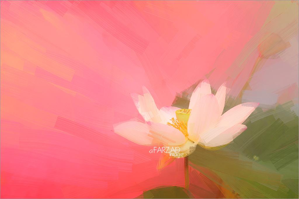 Lotus Flower Oil Paintings / Lotus flower oil Painting / Photographic images using Akvis Oil Paint Filter