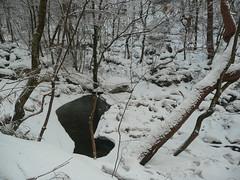 Snowy Pool