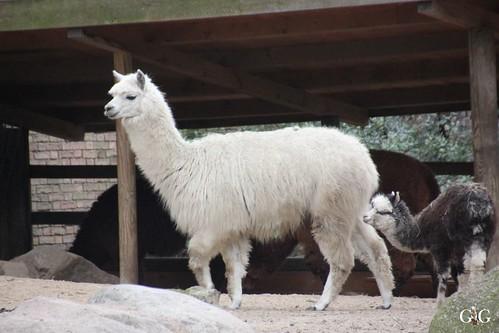 Sonntags Besuch im Zoo Berlin 25.01.2015 73