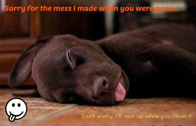 sleepypup