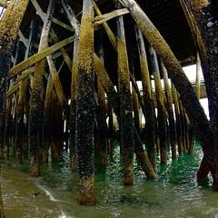 Homer, Alaska #dock #alaska #homer #greens #shells #pacificocean