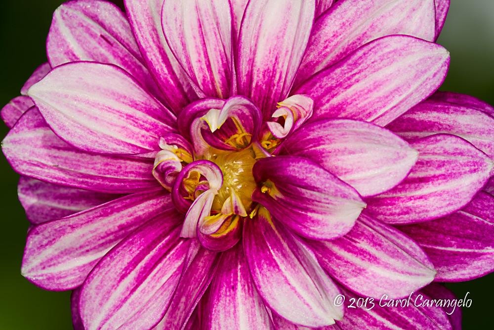 IMAGE: http://farm8.staticflickr.com/7311/8931595480_e4789d4937_b.jpg