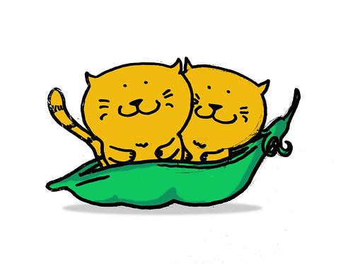 kitty pod