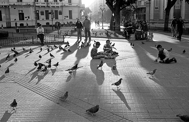 Pombos, crianças e sombras.