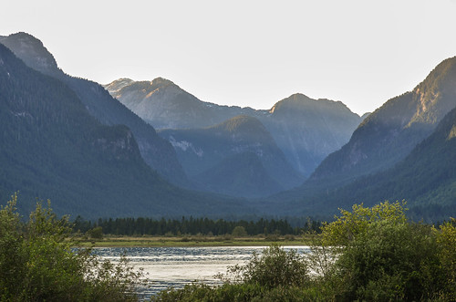 <p>Grant Narrows, Pitt Meadows, British Columbia, Canada<br /> Nikon D5100, 70-300 mm f/4.5-5.6<br /> July 13, 2013</p>