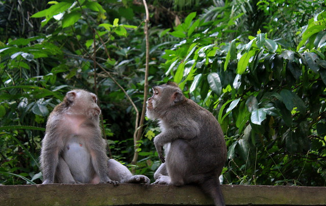 Monkey Forest de Ubud
