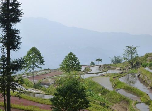 Yunnan13-Yuanyang 18 (3)